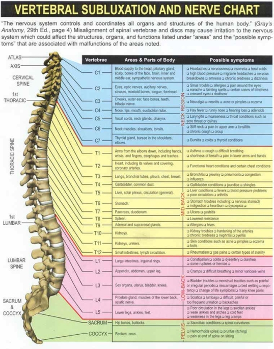 spinechart