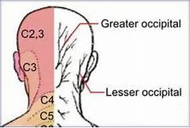head dermatome
