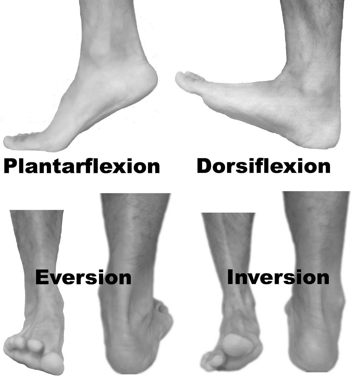 Anterolateral Lower Leg Pain Or Foot Drop Peroneal Nerve