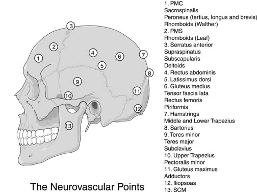 neurovascular_points
